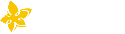 Albicocco Branding & Visual Design